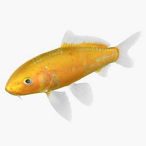 kigoi koi fish rigged 3D model