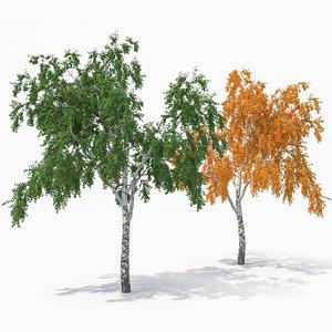 birch tree seasons 3D model