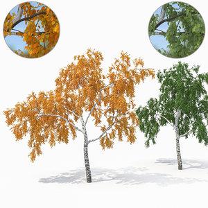 birch tree seasons 1 3D model