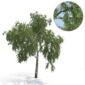 3D model birch tree summer version