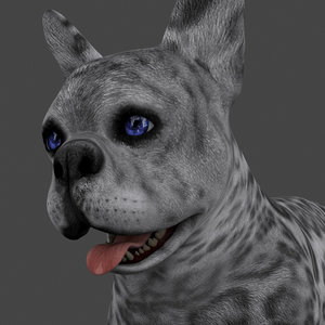 3D rigged male dog