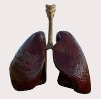 Humman Lungs