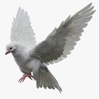 White Dove Fur Animated Rigged