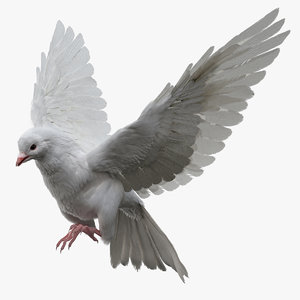 realistic dove rigged 3D model