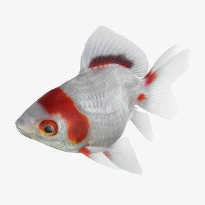 fantail goldfish rigged 3D