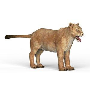 lioness materials 3D