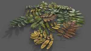 leaves sorbus aucuparia 3D