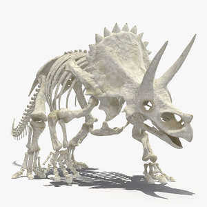 triceratops horridus skeleton walking model