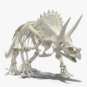 triceratops horridus skeleton walking model