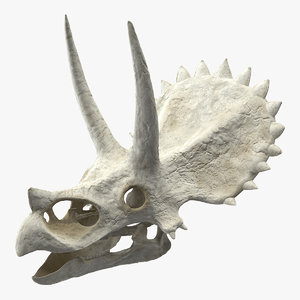 triceratops skull animal 3D model