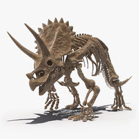 triceratops fossil walking pose 3D model