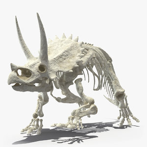 3D triceratops horridus skeleton