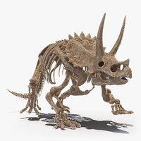 3D triceratops skeleton fossil model