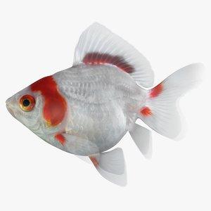 fantail goldfish 3D