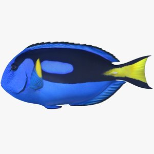 3d model blue tang scanline