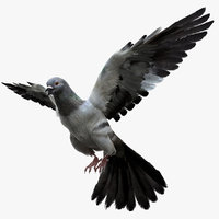 3D realistic dove rigged