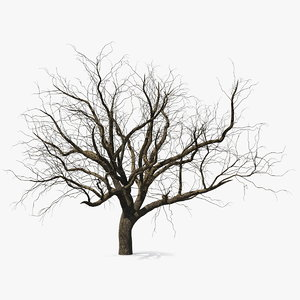 winter peach tree 3D model