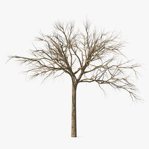 naked small tree 3D