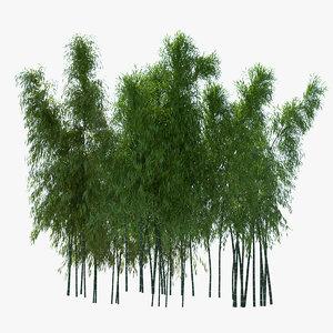 bamboo 3D