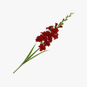 3D gladiolus gladiol
