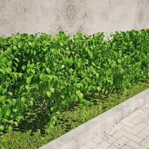 hedgerow hedge plant 3D model