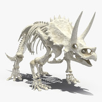 triceratops skeleton 3D model