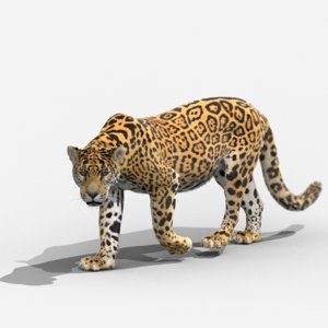 3D panthera onca animation