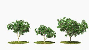 tree wind animation 3D model