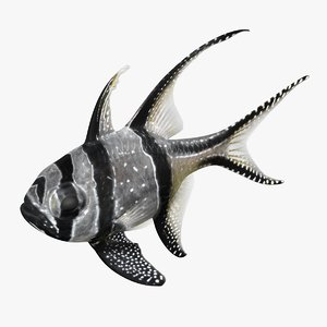 banggai cardinalfish rigged model