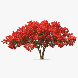 delonix regia tree 3D model