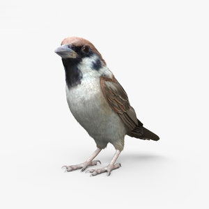 3D model sparrow bird animal