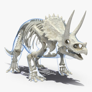 3D triceratops skeleton standing pose model