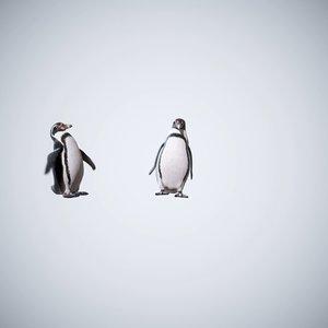 penguins animation 3D model