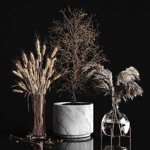 dry plants model