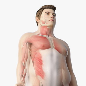 3D model skin obese male skeleton