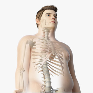 3D model skin obese male skeleton