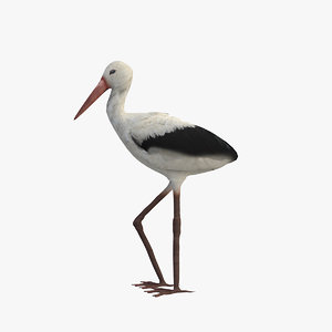 3D stork bird animal model