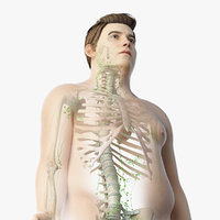Obese Male Skin, Skeleton And Lymphatic System Rigged