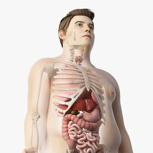 3D skin obese male skeleton model