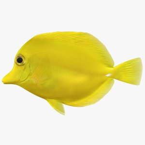 yellow tang scanline 3D