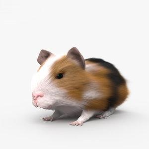 3D guinea pig model