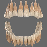 3D dentition teeth