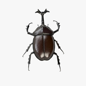 insect beetle 3d model