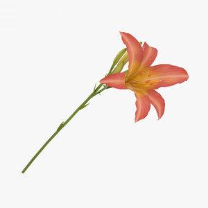 3D daylily hemerocallis lily model