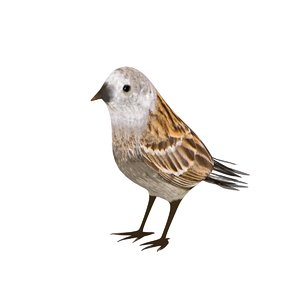 sparrow bird animal 3D model
