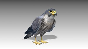 3D model falcon animations