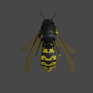 vespa vulgaris common wasp 3D
