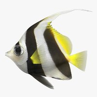 3D bannerfish scanline model