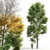 Ash-tree Fraxinus V2