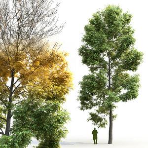 3D deciduous tree ash